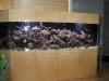build-large-aquariums