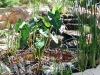 pond-installation