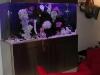 steel-aquarium
