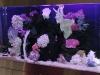 steel-fish-tank