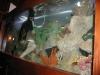 swiming-in-fish-tank