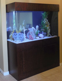 marine-ready-aquariums