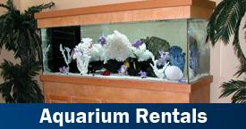 aquarium rentals