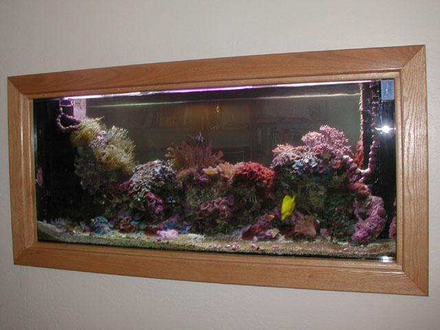 Photo gallery arizona fish guy custom marine aquaria for Spacearium aquariums