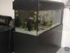 freshwater-aquarium-design
