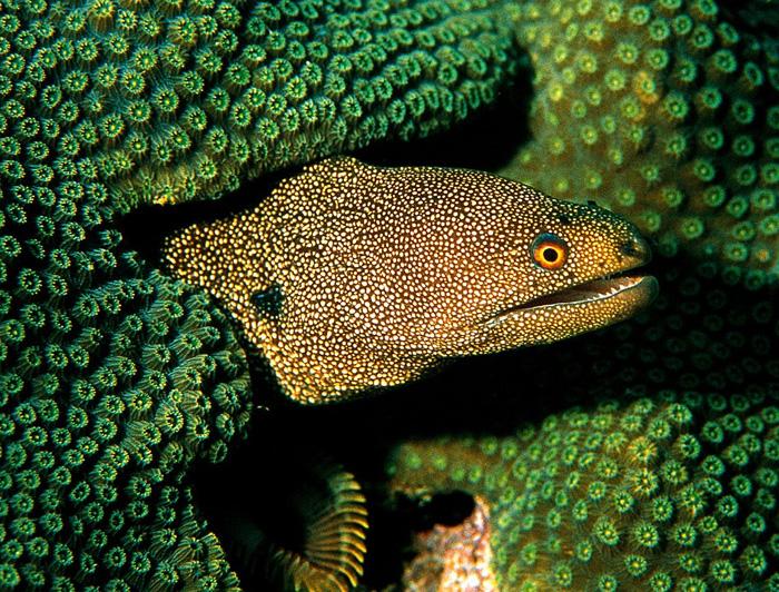 Abbott's Eel