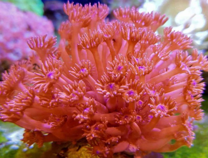 Bright Red (Flower Pot)
